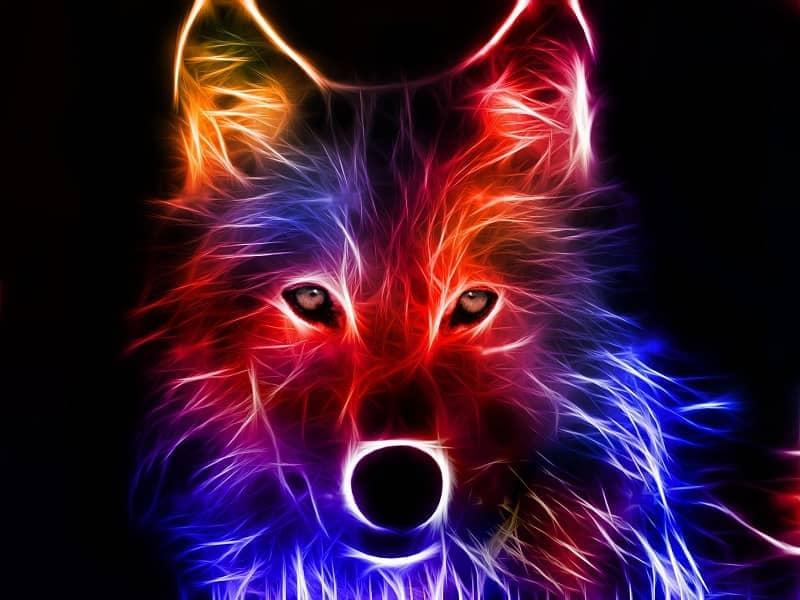 fondo pantalla lobo